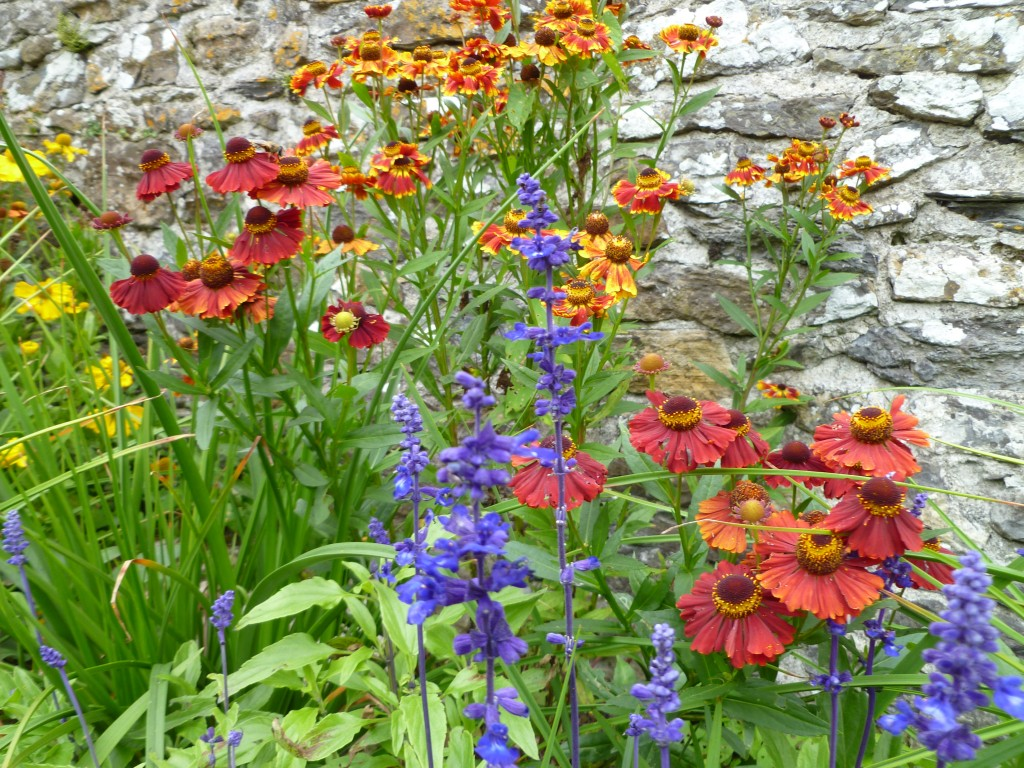 Aberglasney glorious flowers